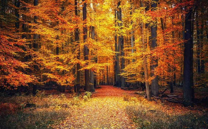 Autumn trees with yellow, gold, and orange leaves