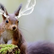 An imaginary animal, a squirrel with horns